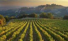 Vynuogynas Prancūzijoje