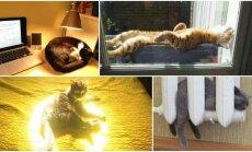 Besišildančios katės
