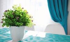Kambariniai augalai virtuvės interjere: kokius pasirinkti?