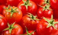 Pagal ką rinktis pomidorų veislę