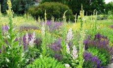 """""""Garden Style"""": ar būtina derlinga žemė, jei norime turėti gražų kiemą?"""