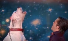 Dainuojantis šuo