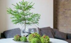 Jaukios, išradingos ir stilingos kalėdinio rankų darbo dekoro idėjos