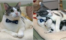 Katinas rūpinasi jaunikliais