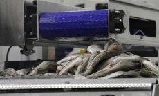 Žuvų pirminio perdirbimo cechas Klaipėdoje
