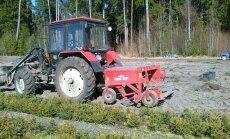 Darbymetis ir Ukmergės miškų urėdijos medelyne: sodmenys iškasami specialiu prietaisu—lankena