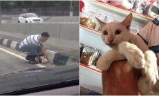 Greitkelyje išgelbėtas katinas