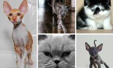 Katės, kurias išvysite parodos metu