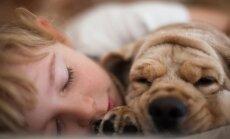 Tyrimas atskleidė sąsają tarp šuns ir žmogaus smegenų