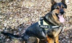 Policijos tarnybinis šuo Gilza