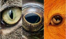 Gyvūnų akys