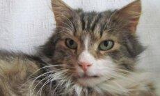 Katinas Dipsis ieško namų