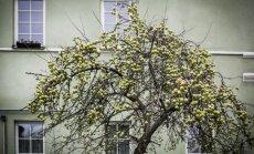 Obelis Vilniuje