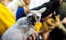 Kačių paroda Kaune