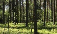 Ragina aplankyti lietuviškas Alpes