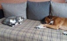 Alytuje rastas katinėlis. Ieškome senų arba naujų šeimininkų