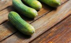 Lietuviškos agurkų veislės, kurios atneš didžiausią derlių