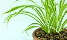 3 populiariausi kambariniai augalai, kurie suteiks namams didingumo