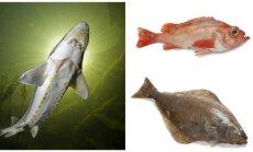 Nykstančios žuvys