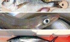 Dorada, ungurys ir tunas