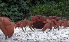 Krabų sala