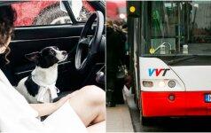 Agresyvaus vairuotojo elgesys šokiruoja: troleibuso keleivė buvo išspirta lauk