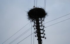 Švėkšnos gyventojai sielvartauja - elektros tiekimo bendrovė išardė ant stulpo įrengtą gandralizdį