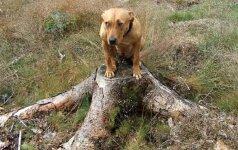 Patarimai, kaip šunį atpratinti nuo bailumo
