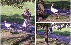 Lietuvos nacionalinis paukštis šiltus kraštus iškeitė į sostinę
