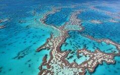 Mokslininkai įspėja, kad nyksta didžiausia gyvų organizmų struktūra pasaulyje