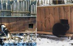 Kaimynai latviai surado būda kaip pasirūpinti benamėmis katėmis