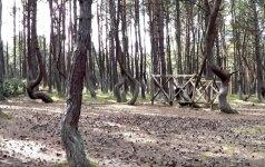 Mistiško miško paslaptys: gidų prašoma nuo jo laikytis kuo toliau