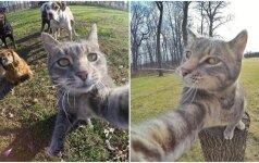 Katė, kuriai pavydėtų daugelis: jos asmenukės tobulos