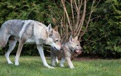 Didžiausi mitai apie šunis: ką reikia apie tai žinoti?