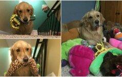 Išrankumui ribų nėra: kiekvieną vakarą šuo miega su vis kitu pliušiniu žaislu