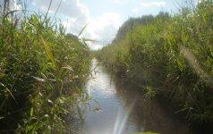 Ventos-Dubysos kanalas