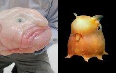 10 nepaprastai keistų gyvūnų: sunku patikėti, kad tokių būna