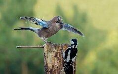 Už gamtos saugojimą – naujas apdovanojimas