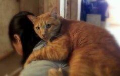 Tokios katės meilės šeimininkei tikriausiai dar nematėte
