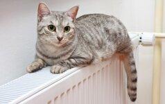 Ką apie katę pasako jos uodega?