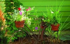 Rūdžių efektas sode: 8 originalūs sprendimai