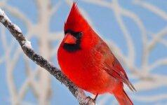 Astrologės Lolitos prognozė sausio 18 d.: apsisprendimų diena
