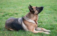 Kodėl šuo neklauso kai kurių komandų?