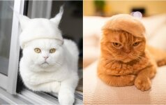 Japonų fotografas katinus puošia kepurėmis iš jų plaukų