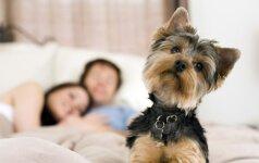 Veterinaras perspėja: jeigu miegate su augintiniu, išvalykite jam ir dantis