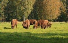 Kai gyvūnai pridaro bėdų: kokių kompensacijų galima tikėtis