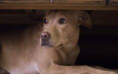 Naujieji metai - gyvūnų košmaras: patarimai, kaip jiems padėti