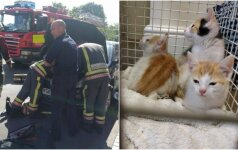 Nesitikėjo, jog gelbėti kačiukus bus taip sudėtinga: prireikė ugniagesių pagalbos