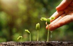 Kaip pagerinti dirvožemio kokybę?
