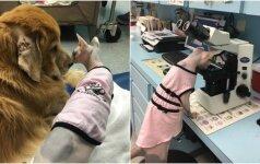 Dėl sveikatos problemų atstumtam gyvūnui pasisekė: įsidarbino veterinarijos klinikoje